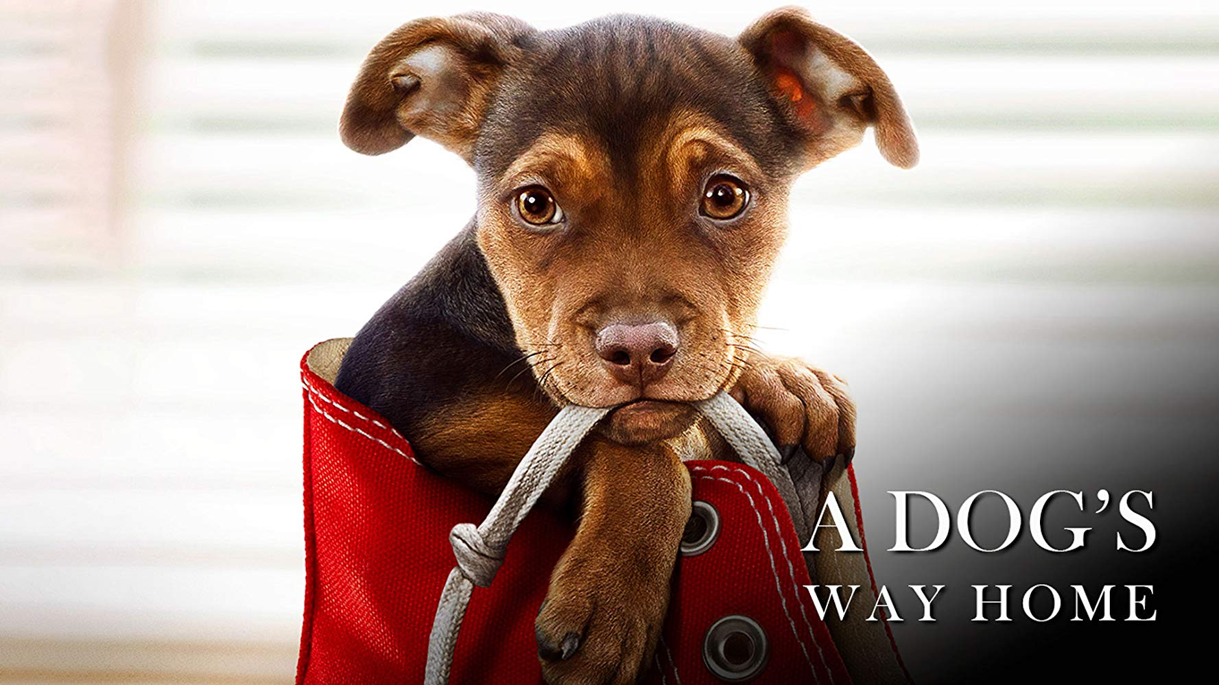 a-dogs-way-home-1.