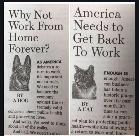 cat dog opinion.png