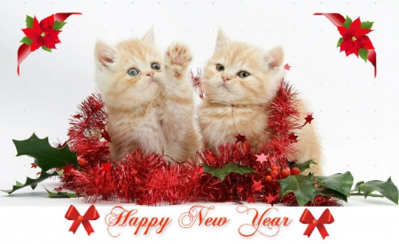 happy new year kittens.