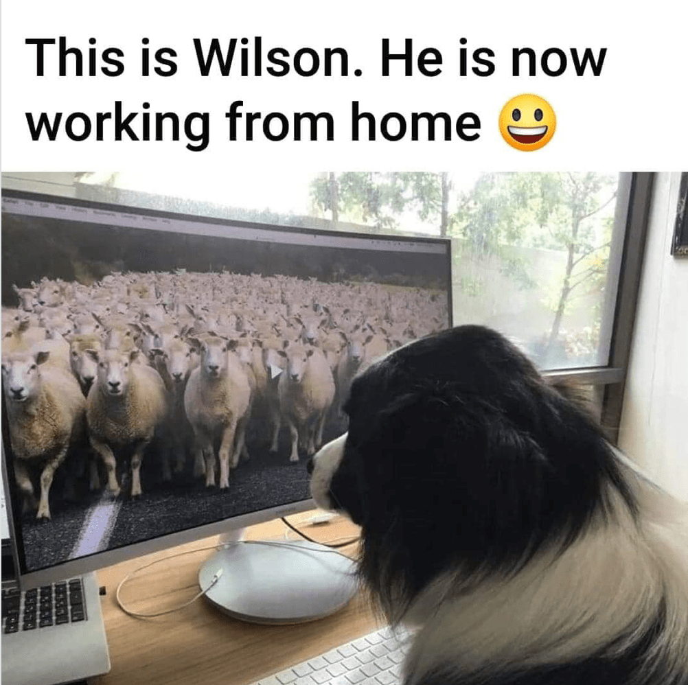 home sheepdog.png