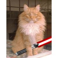 Fluffy Pumpkin with Red lightsaber
