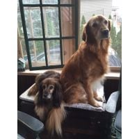 Ike And Kelly   Porch 11 2015