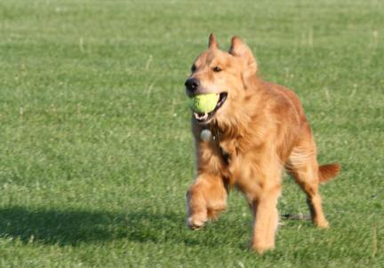 Brooks with Tennis Ball 3 - small.jpg