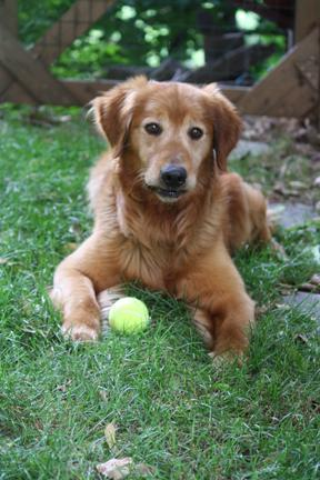 Ike with Tennis Ball - small.jpg