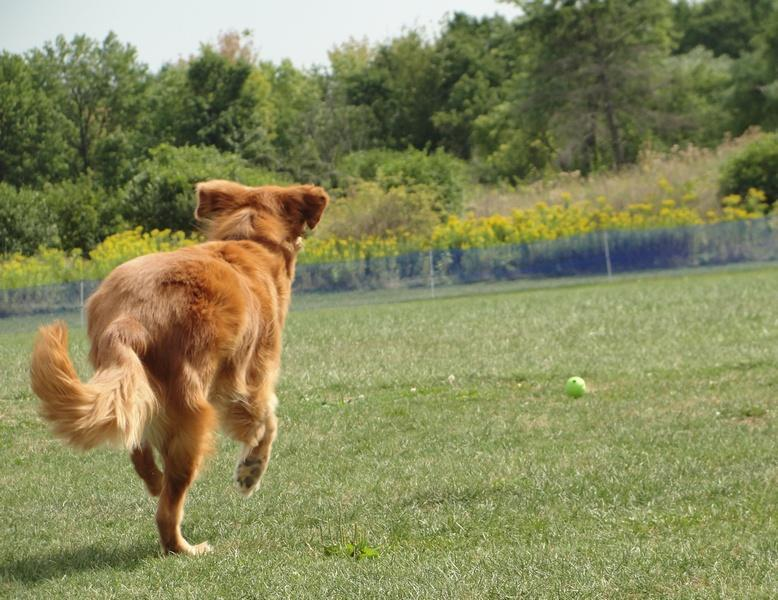 brooks chasing ball.jpg