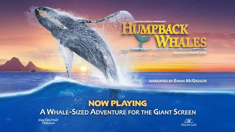 Humpback Whales UHD and 3D Blu-ray Review